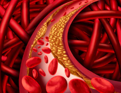 Propiedades y beneficios del aove contra colesterol